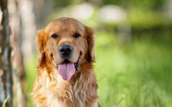 Fotos-de-perros-jugando-7