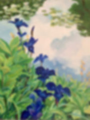 blue iris cropped.jpg