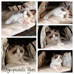 Olympodolls Yves