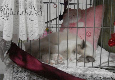 Cayla descansando