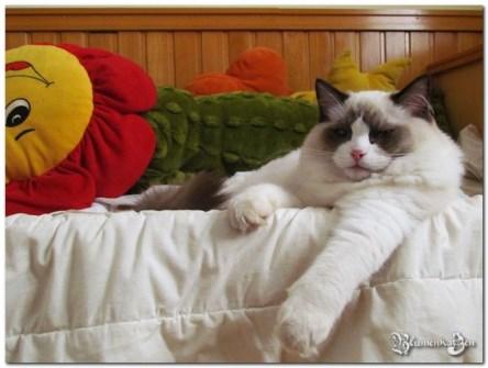 I - Colin x Bellinha - 06.11.2011