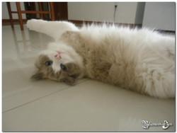 K - Rocky x Ciara - 31.03.2012