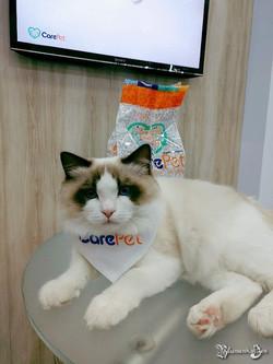 Olympodolls Yves - My Carepet