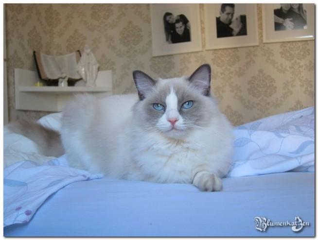 G - Rocky x Radhja - 14.09.2011