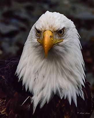 Eagle_SMALL_websiteLOGO.jpg