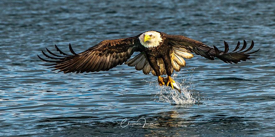 Eagle Ascension 2-1-2310.jpg