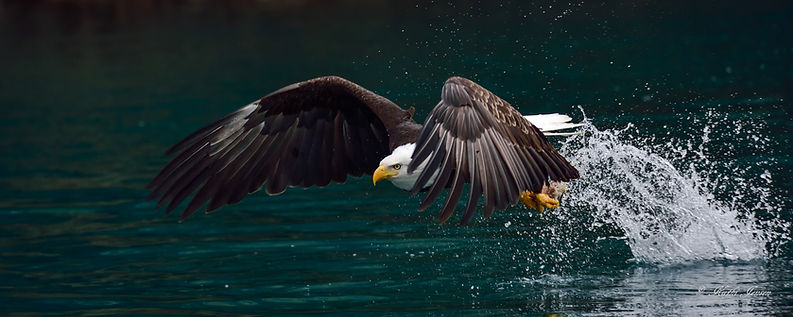 Eagle-3681 Intensity srrr 20x50  wm.jpg