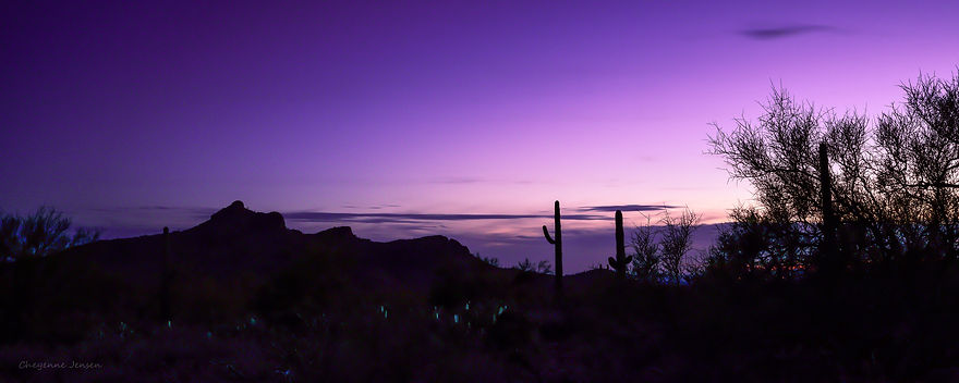 Cactus Superstitions sunset-0499.jpg