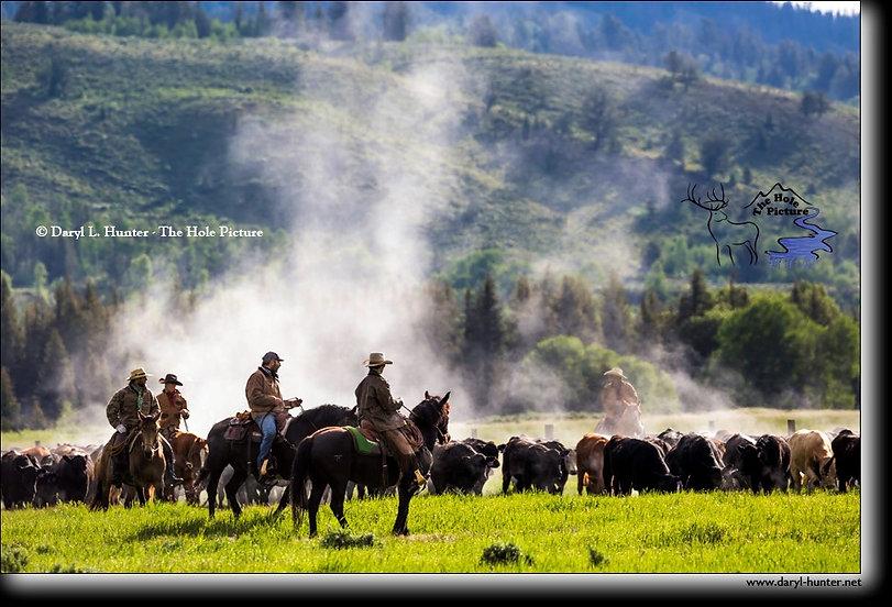 Cattle drive.jpg