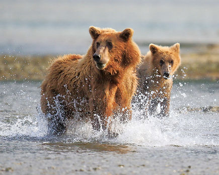 bearssplashE0A7983_8x10.jpg