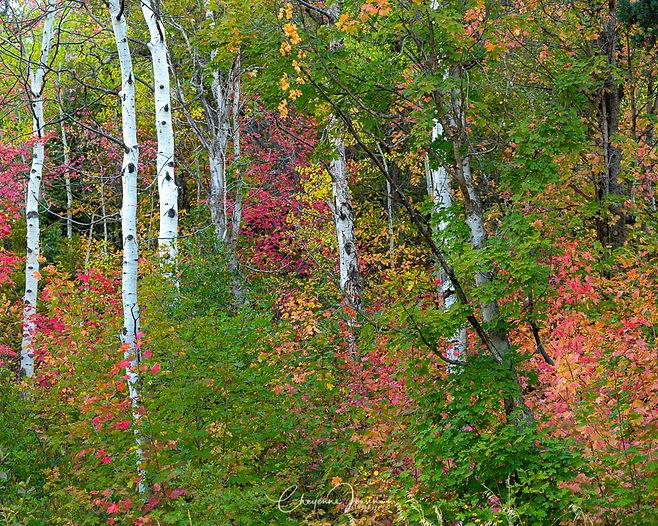 Autumn in Alpine-2432.jpg