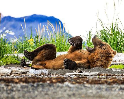 bearnap9163_8x10.jpg