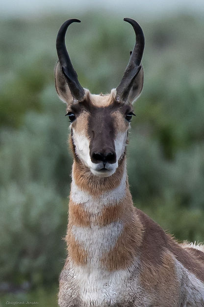 Antelope portrait-0779.jpg