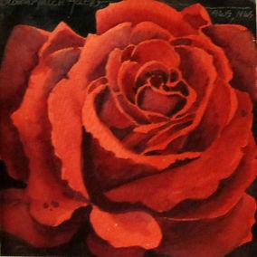 Red Rose 2016 mini .jpg