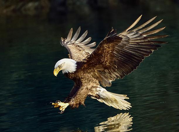 eagle On Golden Wings srr 6493 McK (2) v