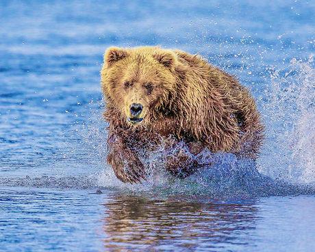bearcharge9398b_8x10.jpg