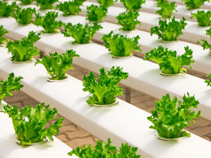 Reverse Osmosis in Hydroponics