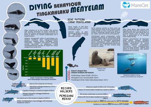 Diving Behaviour
