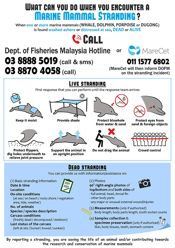 MareCet Marine Mammal Stranding Response