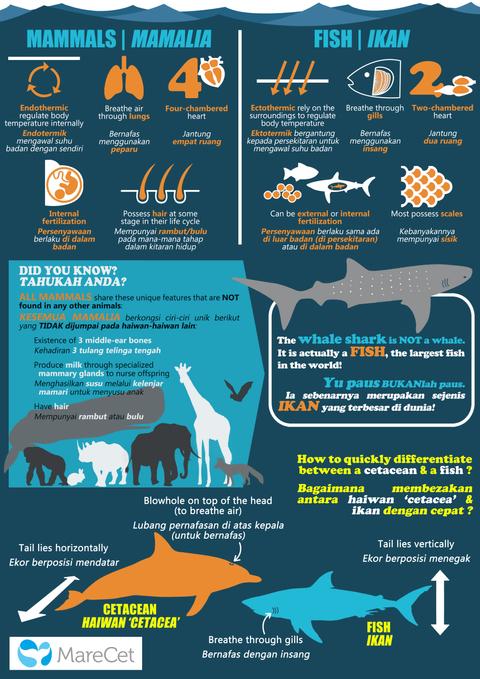 Mammal vs Fish