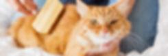 Benefits-Of-Grooming-Your-Cat.jpg