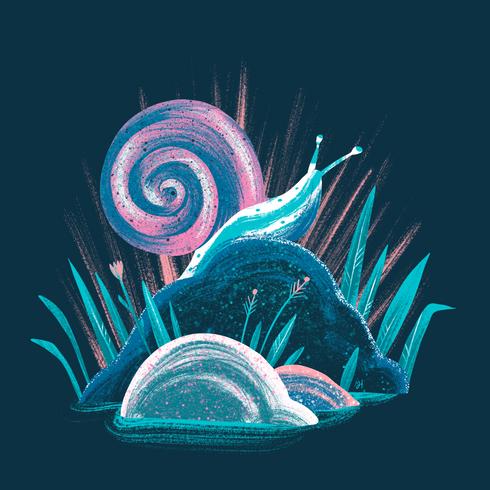 Shells & Rocks