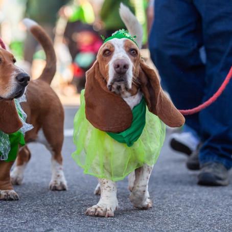 2021 St. Patrick's Day Parade and Siamsa Postponed