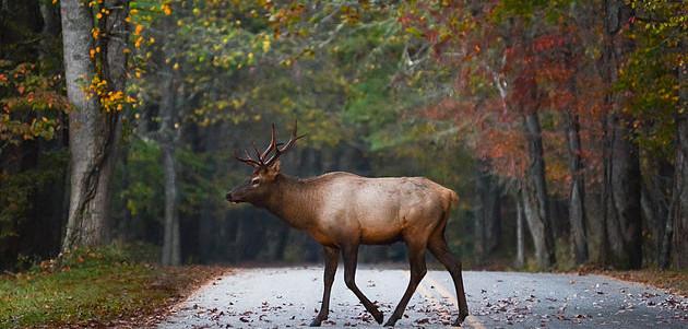 January/February 2019 Publication in 'Wildlife in North Carolina' Magazine - 3rd Place
