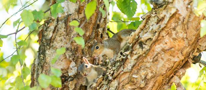 Secret Life of Squirrels Part 2: Mother Squirrel & Babies Photography
