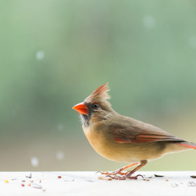 Let it Snow + Bird Photography