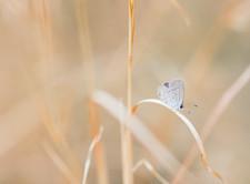 beautiful moth.jpg