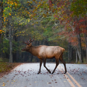 Fall Trip to Cataloochee Valley ~ Great Smoky Mountains National Park - NC