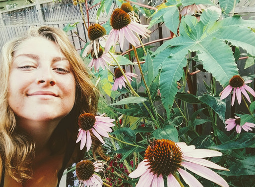 ECHINACEA ~ for boosted immunity
