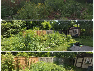 Garden Photos ~ Spring / Summer 2021