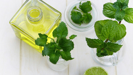 "LEMON BALM- ""Heart's Delight"""