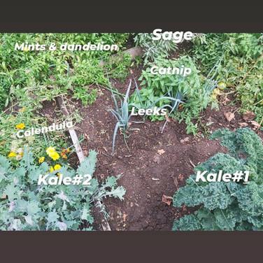 Various fall veggies