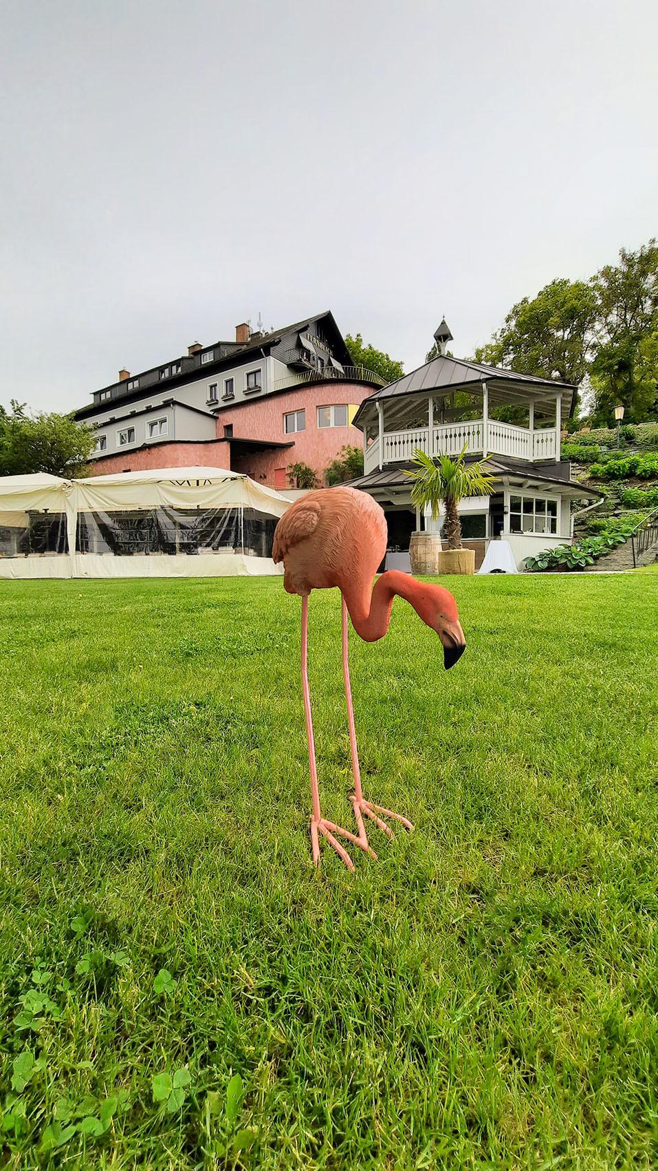 Auch der Flamingo im Garten hat seinen Festen Platz.