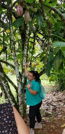 Leatning about cacao (chocolate trees)
