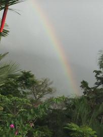 Impromptu rainbow in the backyard