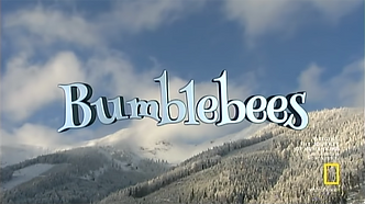 bumblebees video.png
