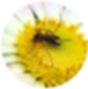 mosquito icon.png