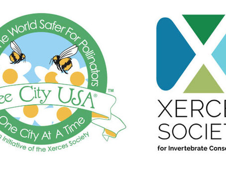 Bee City USA Joins Forces With Xerces Society