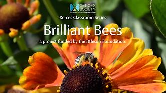 brilliant bees.png