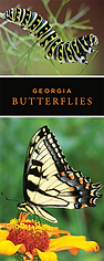 georgia butterflies.png