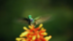beauty of pollination.png