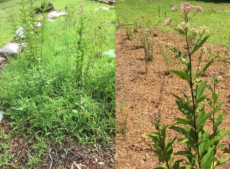 Willow Lane Pollinator Habitat Spruce Up
