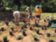 planting 2 IMG_8488 small.jpg
