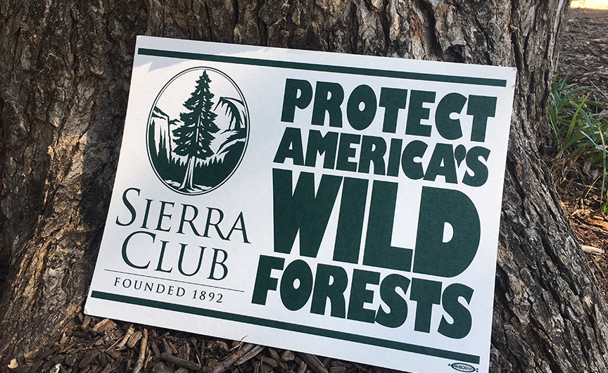 Protect our wild forests!