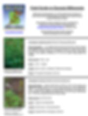 MAG milkweed fieldguide.png