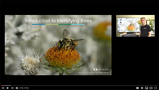 xerces native bees.png